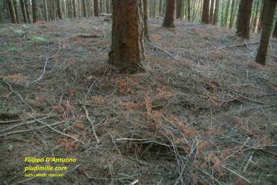 rami caduti in foresta: rischio di inciampare